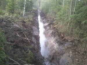 Kanske den i dag torrlagda bäcken åter får rinnande vatten så att det går att meta bäcköring? funderar William Jonsson.