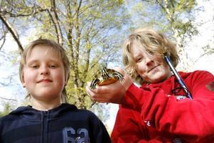 Så här ser den lilla krabaten ut som Erik och Karl fångade i Dalbritas damm i söndags.