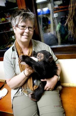 Furuviks minsta schimpans Selma har hunnit bli tio månader. Hon bor fortfarande hemma hos djurskötaren och låtsasmamman Ing-Marie Persson, men tillbringar allt mer tid med de stora schimpanserna och tyr sig alltmer till blivande adoptivmamman Linda. I går gjorde hon succé när hon för första gången mötte Furuviksparkens besökare.