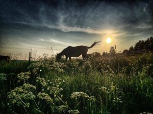 Juli: Solnedgång över Gunnars hästhage.
