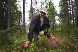 Hans Andersson utbildade sig till svampkonsulent för runt 20 år sedan, han har stenkoll på skogen och bedömer årets blivande skörd som lovande.