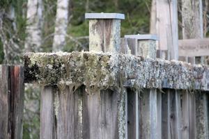Mossor och lavar har fått rejält fäste i dammkonstruktionen.
