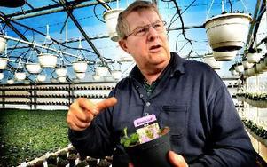 """Christer Haglund toppar en växt. """"Då blir det en fin och tät buske"""", säger han och plockar bort lite överst på växten. Då håller sig växten längre."""