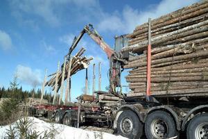 Nu är det full fart i skogen, igen. Den svaga kronkursen gynnar sågverken vilket också gynnar åkeribranschen.Foto: hans-råger bergström