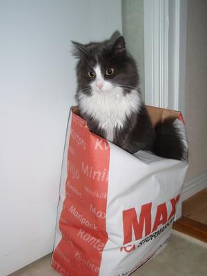 ICA MAXI om kattem själv får välja