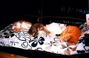 Det ska vara gott att leva för katter.