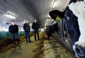 Gunilla Mellgren arbetar hos Carl-Åke Broström som fått Lantbrukets arbetsmiljöpris. De besöktes i går av Ernst Åslund, mitten, från Kommunal Z.  Foto: Henrik Flygare