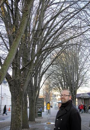 Fem friska. Almarna längs Norra Källgatan utanför Hemköp i centrala Västerås är fortfarande friska vilket gläder både stadsträdgårdsmästare Lars Wiberg och stadens kajor. Men riktigt säker på att almarna klarat sig från smitta kan man inte vara förrän i vår då bladen börjar titta fram.