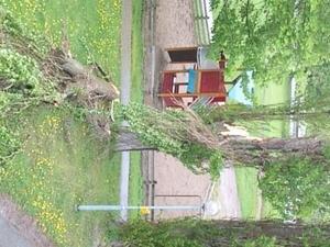 Storm och trädet föll på innegård i sandgärdet/västerås på söndagen vid 14-tiden