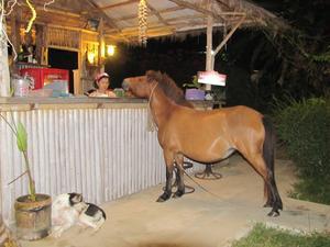 I december var vi i Thailand.  Kom  till en restaurang som låg ganska ensligt. Satte oss och beställde maten, fick se en häst komma gående förbi på vägen med ett rep hängande efter sej. Förvånade såg vi hästen svänga in där vi ställt vår bil  och fortsatte sedan direkt in genom entren på restaurangen och ställde sej och tittade uppfodrande efter personalen.Vet ej vad han beställde.