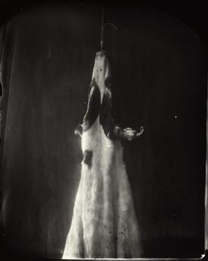 """""""Untitled"""" ur serien """"What remains"""". Bilden föreställer skinnet från Sally Manns hund Eva. Det älskade husdjurets bortgång satte igång hennes tankar kring döden och vad som händer med kroppen efteråt."""