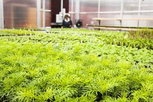 Plantor av många slag står på tillväxt i kommunens växthus.