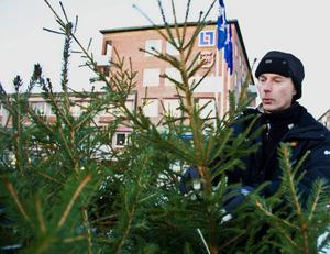 Lennart Strömberg ställer i ordning granarna han hoppas få kunder till. För även om det är ett par veckor till jul så kan en adventsgran ute i trädgården passa väldigt fint.