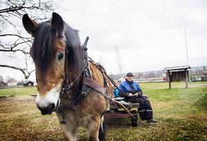 Lars Andersson och hästen Odin bjöd på åkturer runt forngården.