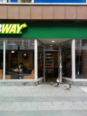 Ja man kan tro att gässen funderade på att ta lunch på Subway, men de vände i dörren. De blev en rolig bild i alla fall...