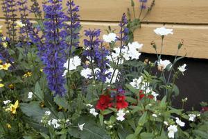 Blommorna är det första som möter besökarna.