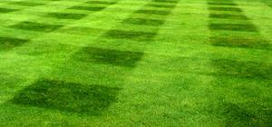 Den perfekta gräsmattan.