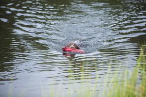 Vattenapporttävligarna lockade också många åskådare. Hundarna sprang ut i vattnet på ägarens kommando för att hämta en röd leksak som kastades ut i vattnet.