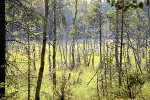 Mossmarker intill Snårsjön.