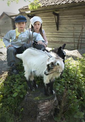 Killingarna föddes i mars och väckte stort intresse hos barnen. Här klappar Viktor och Linnea de söta djuren.
