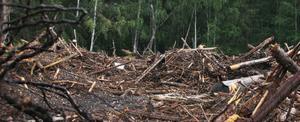 Bark i mängder täcker en gammal tipp i skogen mellan Hybo och Gryttjesbo.