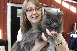Trots att han är stor och grå heter han Lilla blå. Ägare är Ingrid Bode som föder upp norska skogskatter. Hon hoppas att Kattens dag ska bidra till att höja katters status.– Vi kattägare bryr oss lika mycket om våra katter som hundägare bryr sig om sina hundar, säger hon.