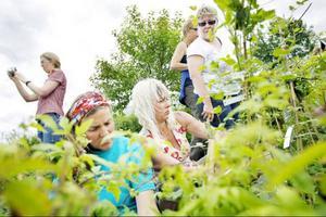 Femton personer deltar i den populära trädgårdskursen som ges på Birka folkhögskola. Mycket ska läras in under en intensiv vecka.