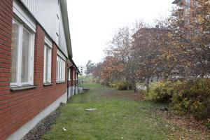 Rönnbärsträden på baksidan om Montessoriskolan i Vigelsjö.