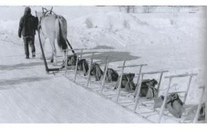 En rad nya exemplar av Orsasparken har lastats med sandsäckar för inkörning av medarna. Agneta Björnebo kör hästen.