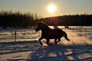 vart grymt fotosugen, så jag tog ut kameran och fotade min lilla häst. Här är en av mina favorit bilder !