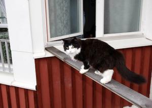 Lucas har en egen väg in till lägenheten. Ibland bjuder han hem någon kattkompis. Även någon råtta eller fågel har han tagit med sig in till Ruth.