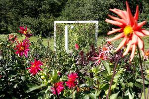 Till sommaren blommar Wij Trädgårdar upp på allvar.