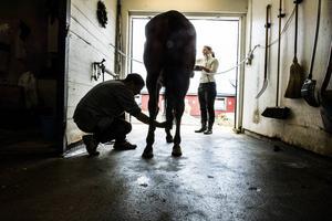 En lång rad olyckor har inträffat inom hästnäringen och kunskapen om vilket ansvar arbetsgivaren har brister.