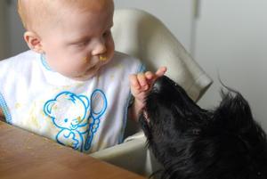 När min underbara systerson Albin fick äta mat helt själv (läs kladda), så förstod våran hund Gibson plötsligt hur kul de är med kladdiga barn ;)