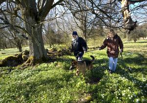 Återvändare. Klas och Lena Forsberg åker till Sörön varje år. De har även med sig hunden Fersin.