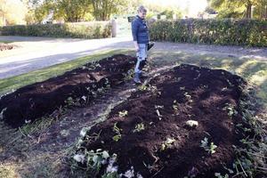 Anna Gustafsson vid en av de kompostlimpor de ska odla i till våren. Fårull finns i varven. Ullen kikar fram här och där längs kanter och i ändar.