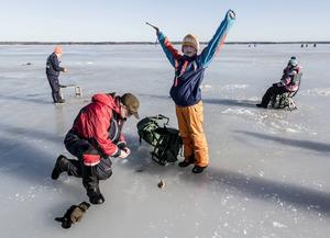 Första abborren i första hålet. Albin Nehrer, 11 år, är jublande glad. Det han har lärt sig på fiskekursen fungerade: röra spöt ibland och hålla still ibland. Anders Norberg från fiskeklubben hjälper honom att sätta på ny maggot.