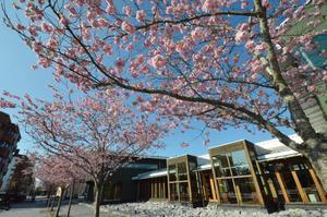 Nu blommar det! Då passar personalen på Kumla bibliotek på att göra en dag i rosa. Bild: JAN WIJK