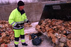 Efter sorteringen lastas komposten i en container som fraktas till Borlänge.