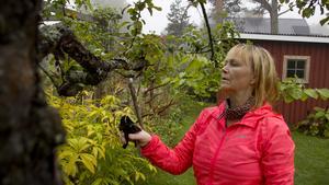 """Det är flera saker som behöver klippas ner. På äppelträdet tar Ramona de nya grenar som växer inåt och i kors. """"När man klipper så får det inte bli några rockhängare."""""""