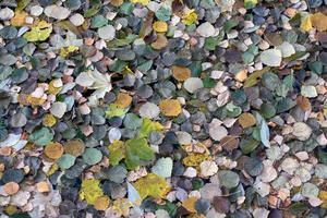 Höstens modefärger i form av löv som flyter på vattnet. Det var de många olika nyanserna som fångade min blick och fick mig att ta bilden.
