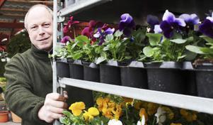 Per Bürger med vårens första penséer.