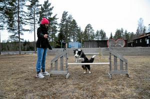 Lovisa Cannryd brukar ta med sig bordercollien Uno till  Kvinnersta skolan där hon är elev. - Vi tränar lite agility och ibland har vi uppvisning, säger Lovisa.