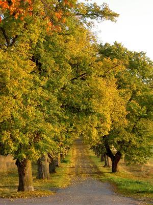 Hösten kan vara så underbart vacker.