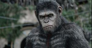 Apornas planet brukar filmas med jämna mellanrum. Nu är det dags för