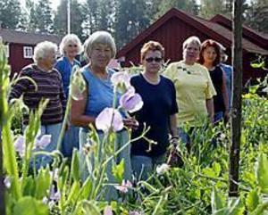 Foto: LASSE HALVARSSON Kryddodlare. Här är några av deltagarna i studiecirkeln: från vänster i bilden Anna Myrman, El-Marie Wicksell, Laila Wedin, Ann-Katrin Sundqvist, Pia Möller, Karin Sandberg och Christina Löfgren.