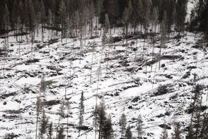 Utmed Ljungans dalgång är skadorna efter stormen Ivar som värst.