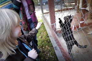 Ellen Nordlund hade en stund av lek hos Kattsamaritens katter.
