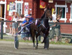 Hans Sohlström i Hoting med egna uppfödningen Sarah Lena. Här i sitt karaktäristiska röd-blåa ställ med hemmaorten Gastsjön i stora bokstäver på ryggen.