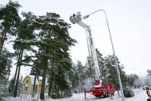 Jessica Sundqvist och brandmannen Martin Nilsson åkte med skylift upp i tallens topp för att försöka få ned katten.
